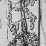 Inkt tekening Zonnebloem